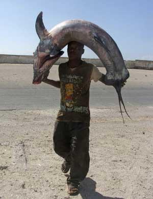 Fischen jetzt wieder mit Erfolgsaussichten für Küstenbewohner in Ostafrika