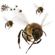 bee_swarm_small